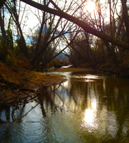 Washington Park creek