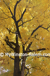 Fall Autumn yellow gold leaves