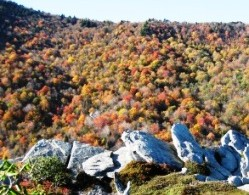 Blue Ridge Parkway Fall Foliage