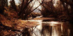 Forsyth Creek Week